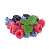Mix of fresh berry Stock Image