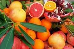 Mix of fresh citrus fruits Royalty Free Stock Image