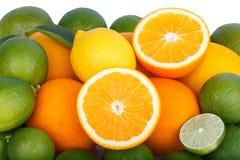 Mix of fresh citrus fruits Stock Image