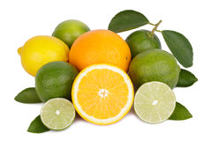 Mix of fresh citrus fruits Royalty Free Stock Images