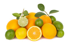 Mix of fresh citrus fruits Stock Images