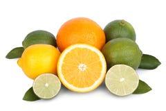 Mix of fresh citrus fruits Royalty Free Stock Image