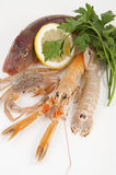 Mix of fresh fish Royalty Free Stock Images