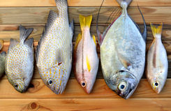 Mix fresh fishes from market. Mix fresh fishes from fishery market on wooden plate in sunlight time Stock Photography