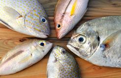 Mix fresh fishes from market. Mix fresh fishes from fishery market on wooden plate in sunlight time Royalty Free Stock Photography