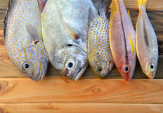 Mix fresh fishes from market. Mix fresh fishes from fishery market on wooden plate in sunlight time Royalty Free Stock Image