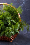 Mix of fresh herbs Stock Image