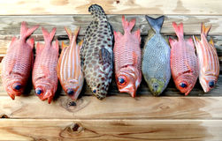 Mix fresh Pinecone soldier fish and grouper fish for cooking Stock Photo