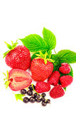 Mix of fresh and ripe berries isolated on white background. Mix of fresh and ripe berries isolated on white background Stock Photos