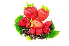 Mix of fresh and ripe berries isolated on white background. Mix of fresh and ripe berries isolated on white background Royalty Free Stock Images