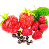 Mix of fresh and ripe berries isolated on white background. Mix of fresh and ripe berries isolated on white background Royalty Free Stock Image