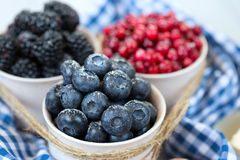 Mix of fresh ripe berries, sprinkle with sugar. Royalty Free Stock Images