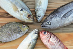 Mix fresh sea fishes for cooking. Mix fresh indian mackerel fishes and other fishes for cooking from asian fishery market Royalty Free Stock Photo