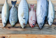 Mix fresh sea fishes for cooking. Mix fresh indian mackerel fishes and other fishes for cooking from asian fishery market Stock Images