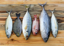 Mix fresh sea fishes for cooking. Mix fresh indian mackerel fishes and other fishes for cooking from asian fishery market Stock Photo