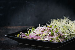 Mix of Fresh Sprouts. Healthy diet. Fresh Garlic and Radish Sprouts on black square plate over black metal surface. Side view Royalty Free Stock Photo