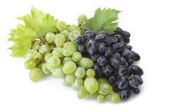 Mix of freshness grape stock image