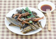 Mix fried insect on white dish Stock Image