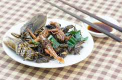 Mix fried insect on white dish Stock Photography