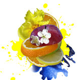 Mix fruit Stock Images