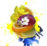 Mix fruit Stock Images