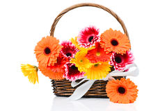 Mix gerber flowers in the basket Royalty Free Stock Images