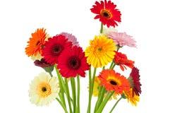 Mix of gerber flowers Stock Photo