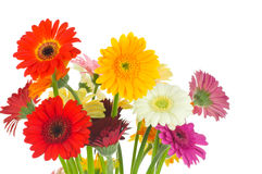 Mix of gerber flowers Stock Images