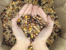 Mix grain heart Royalty Free Stock Photo