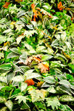 Mix green leaf background . Royalty Free Stock Photography