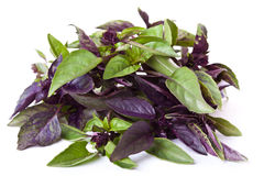 Mix of green and purple basil Stock Photography