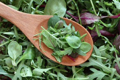 Mix of green salads in a wooden spoon. Arugula, Chard (Mangold), Corn Salad in a wooden spoon on mix of green salad background.  Close-up Stock Photography