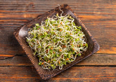 Mix of green young sprouts Stock Photography