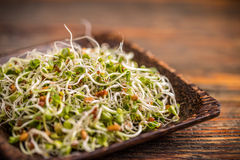 Mix of green young sprouts. In plate Royalty Free Stock Images