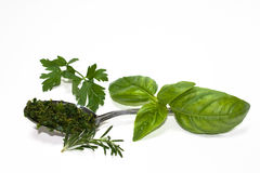 Mix Of Herbs. Food & Drinks - Herbs & Spices - Basil, parsley, rosemary and spoon with chopped mix Royalty Free Stock Images