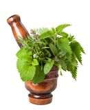 Mix herbs Stock Image