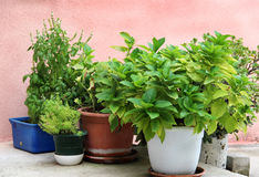 Mix of herbs in the pot Royalty Free Stock Images