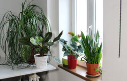 Mix of houseplants in the white room Stock Image
