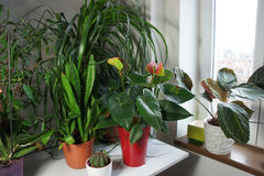 Mix of houseplants in the white room Royalty Free Stock Photo