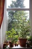 Mix of houseplants on the window Royalty Free Stock Image