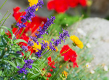 Mix of live flowers. Mix of flowers in the flowerbed Royalty Free Stock Images