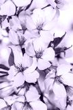 Mix of lovely flowers spring to sumer. A lovely mix ac spring, summer and autumn flowers, season of love Royalty Free Stock Photo