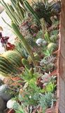 Mix of many succulents and cactus with sharp prickles and thorns Stock Photo