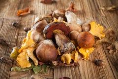 Mix of mushrooms on wooden planks Stock Photo