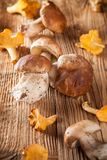 Mix of mushrooms on wooden planks Stock Images
