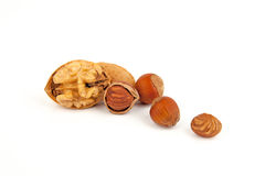 Mix nuts (hazelnuts, walnuts). Stock Image