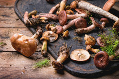 Mix Of Forest Mushrooms Stock Photo