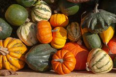 Mix Of Ripe Green, Orange, Yellow Pumpkins, Squash And Gourds With Different Varieties And Shapes From The Fresh Harvest Stock Image