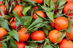 Mix of Oranges and leaves Royalty Free Stock Image