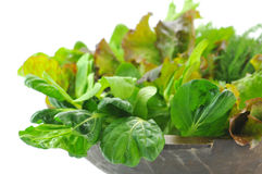 Mix Organic Salad Leaves Royalty Free Stock Images
